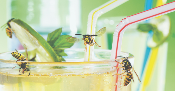 Natürlicher Insektenschutz: So vermeidest du Stiche