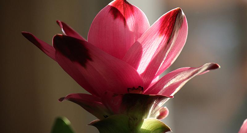Kurkuma: Wunderwurzel oder einfach nur lecker?